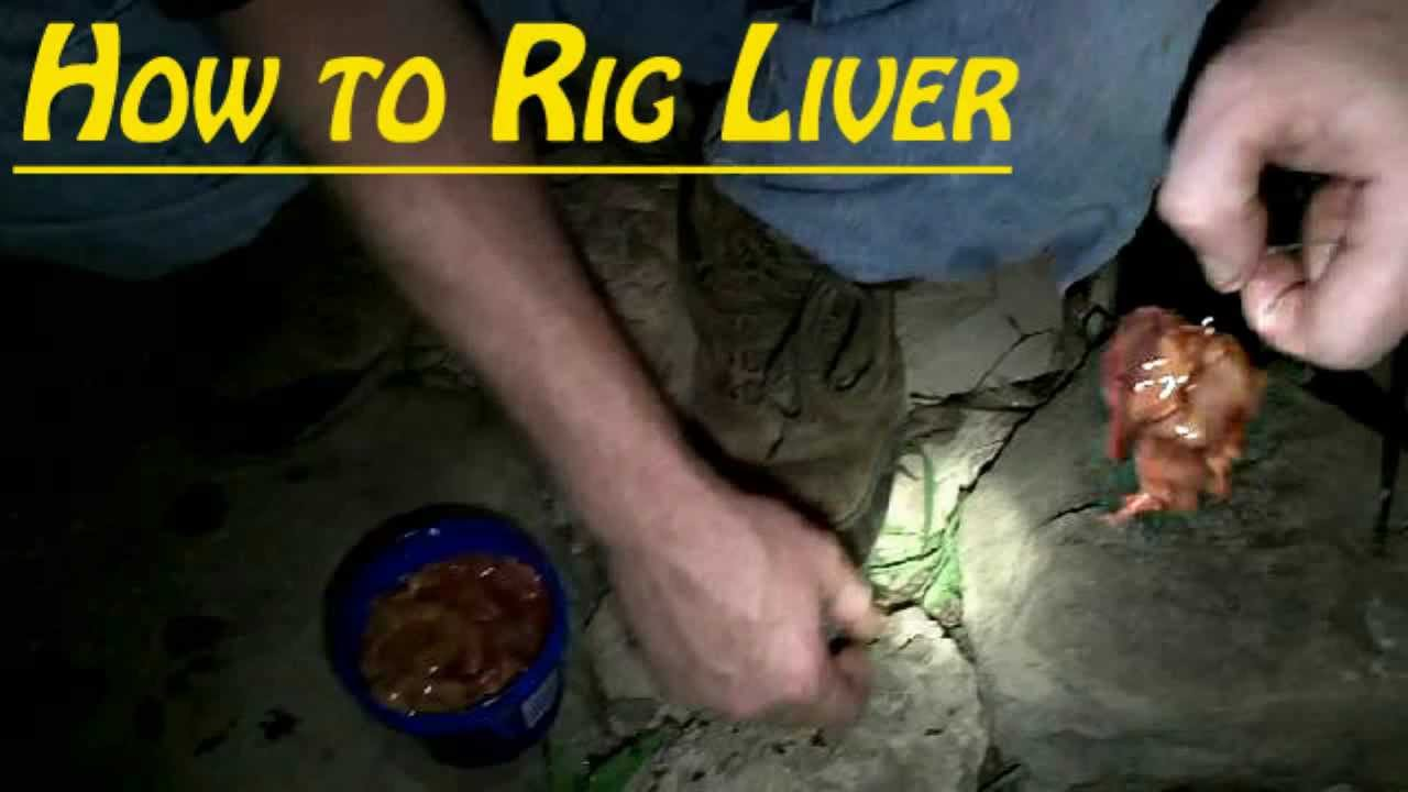 How to rig chicken liver catfishing youtube for Fishing with chicken liver