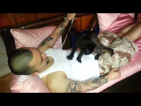Cat massages death metal owner