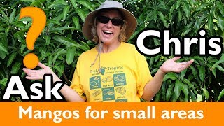 ASK CHRIS- What are the best varieties of mangos to plant in small spaces?