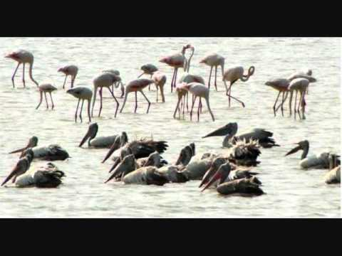 Maa tourism.com Pulicat lake(Eco-Gateways of Hyd,Bangalore,Chennai)(Tourist Corridor-150 km)