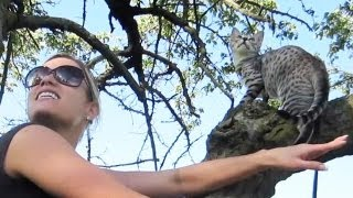 KITTY STUCK IN TREE