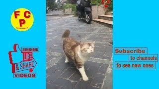 Pets always make you can not help laughing ( funny dogs and cats )( funny cats vines )