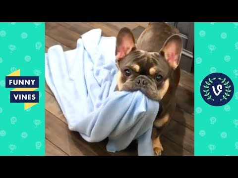 TRY NOT TO LAUGH - Funny Animals & Cute Pets Compilation | Funny Vines August 2018