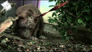 Rescue Dog ? How to rescue dog who are suffering on the stre...