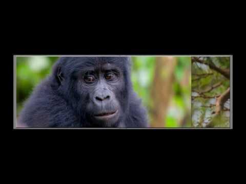 Uganda photo book 2012