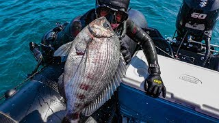 My BEST day Spearfishing in England - Catch and Cook Scallops, Crab, Sea Bream