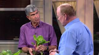 Central Florida Gardening-All About Lettuce