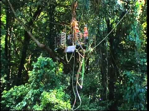 Jungle Surfing - Daintree Style
