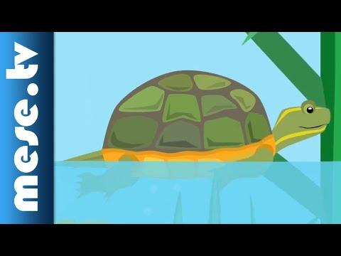 Vilmos Gryllus: Turtle | Half Minute Song | MESE TV