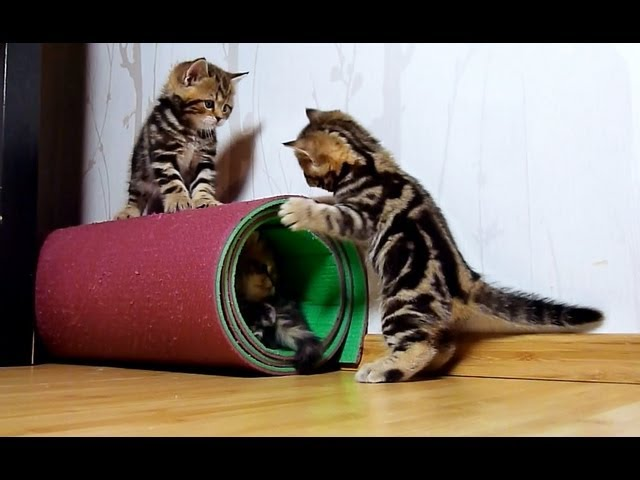 Training of Cutest Cats Special Forces. Funny Cats