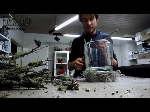 Windlicht (Glas) mit Naturmaterialien ausschmücken - Herbst- / Weihnachtsglas