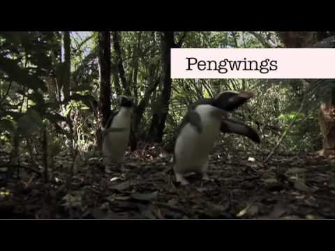 "Benedict Cumberbatch can't say ""Penguins"""