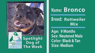 Dog of the Week: Bronco the Rottweiler Mix