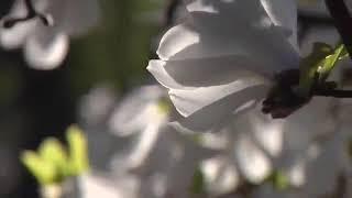 Nghệ Sĩ Lệ Thủy Ca - Mùa Hoa Tạm Biệt