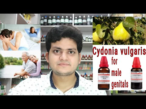 Cydonia vulgaris ! Homeopathic medicine Cydonia vulgaris ? Sign and symptoms Disease and doses !