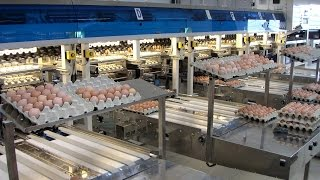 EXN - 3000 - Egg Grading and Packing System ( 2010 г.)