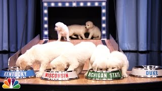 Puppies Predict the 2015 Final Four Championship