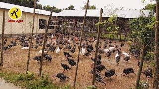 টার্কি মুরগীর খামার করে সফল দুলাল, Dulal succeeded in keeping the turkey