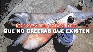 Top 5 Peces Mutantes Captados En Video Que No Creerás Que Existen 2017
