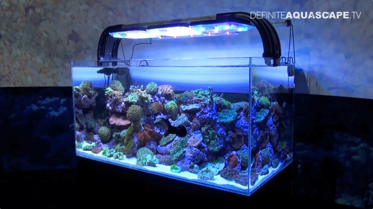 Aquarium Ideas From Interzoo 2014 Pt 5 Tropical
