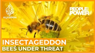 Insectageddon | People & Power
