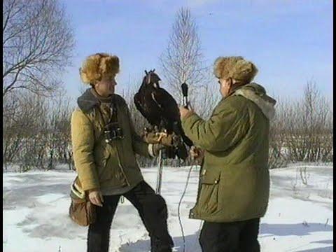 Ловчий беркут (1996, Россия)