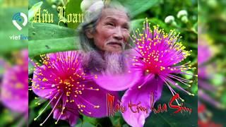 """Lời tự thuật của tác giả bài thơ """"Màu Tím Hoa Sim"""" kể về những kỷ̃ niệm của nhà thơ Hữu Loan"""
