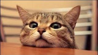 funny video cats ( gatos chistosos)