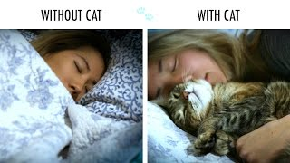 Without Cat Vs. With Cat