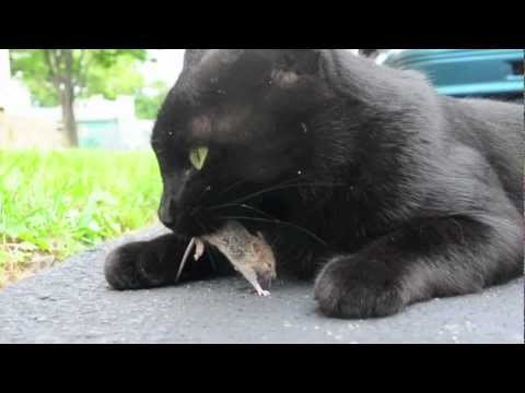 Funny Cat And Bird On Youtube