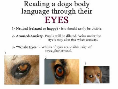 Dog Ear Signs