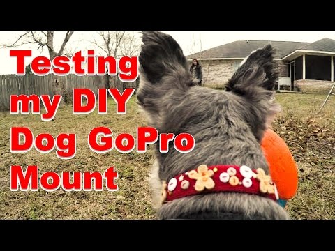 My DIY Dog GoPro Mount in Action (+ Kick Fetch Ball)