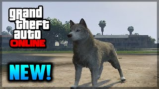GTA 5 PS4 - How To Play As A Dog - NEW Peyote Plant Location! (GTA 5 Gameplay)