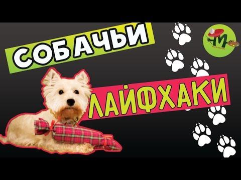 8 лайфхаков для собак и их владельцев