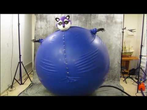 Blueberry Inflation Raccoon