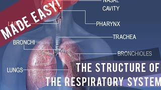 The Complete Respiratory System [Made Easy!]