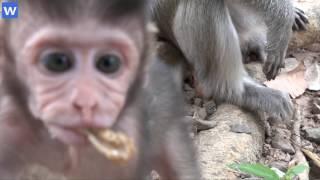 Amazing baby monkeys - 1 hour about baby monkeys - Amazing animals