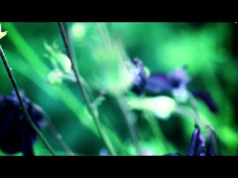 BT - Our Dark Garden