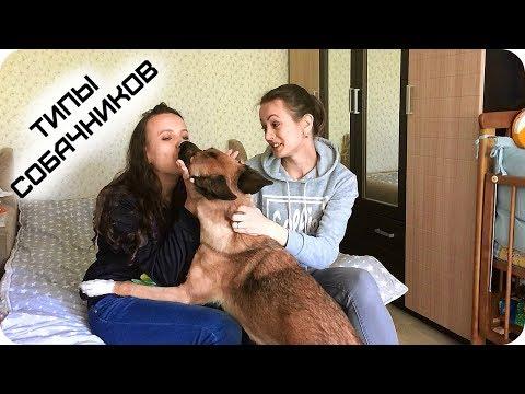 Типы собачников