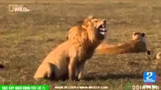 Hài động vật lồng tiếng - Tập 7