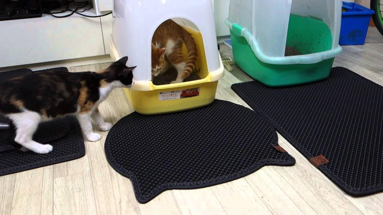 Kitty city cat litter mat