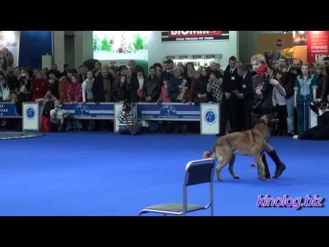 Танцы с собаками. Выставка собак Евразия.