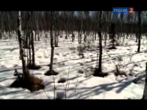 Кострома - колыбель монархии.wmv