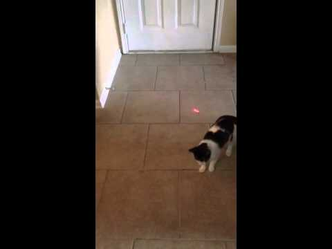 Mako vs. Laser Light