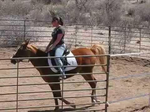 II Shea's Wildfire Arabian mare for sale Tombstone AZ Shea in Tombstone
