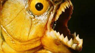 12 Loài Thủy Quái Đáng Sợ Và Nguy Hiểm Nhất Thống Trị Vùng Rừng Rậm Amazon