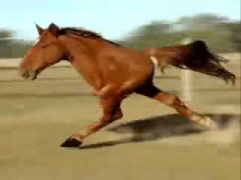 videos about horse