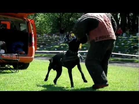 """""""Защитная собака"""" Золотоноша 2012, К-9"""