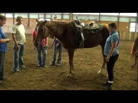 Introduction to Horse Production at Missouri State University-West Plains