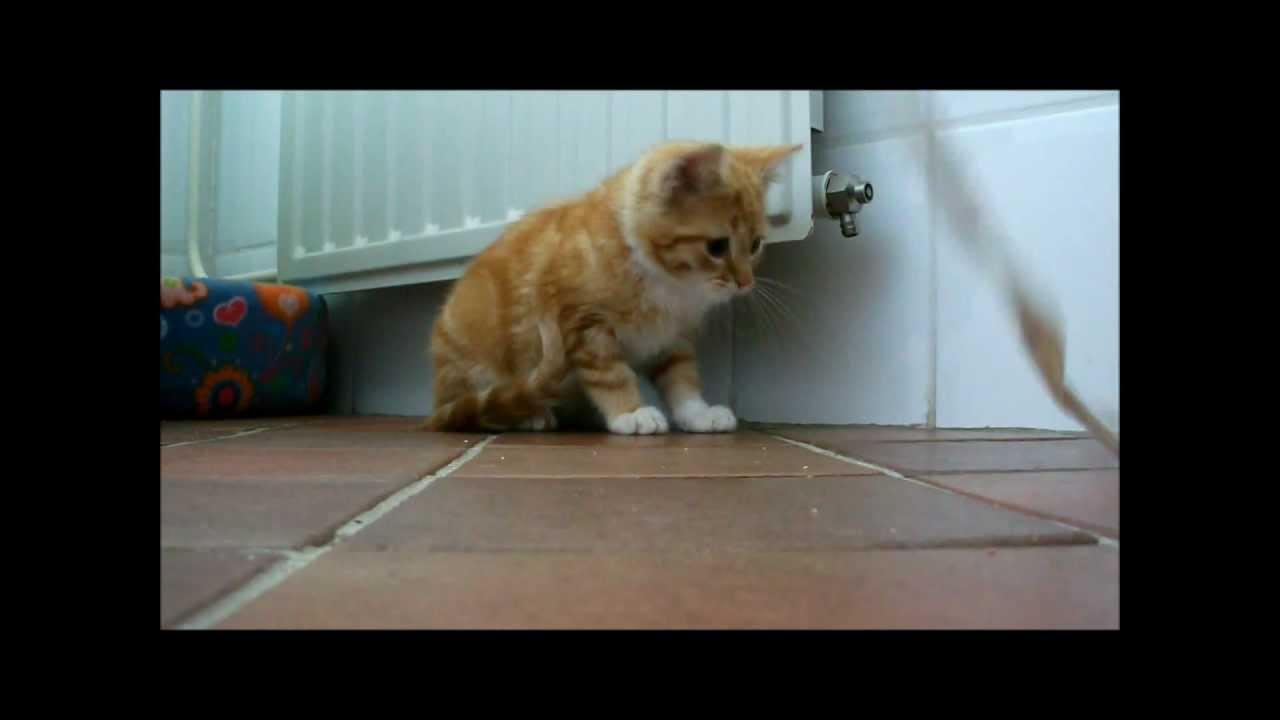 Very Shy Kitten Shy Kitten Playing